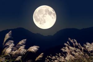 お月見 楽しむ方法 月