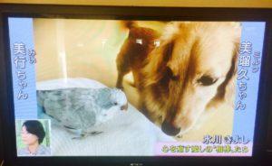氷川きよし 愛犬 オキナインコ