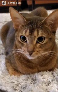 ジェジュン 猫