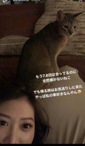 しほ インスタ 猫